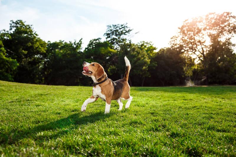 perro parque canino